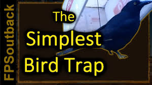 the simplest bird trap you