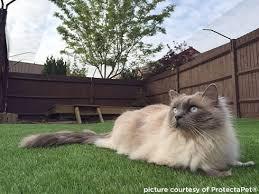 Fencing In Your Garden International Cat Care
