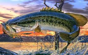 largemouth b fishing wallpaper