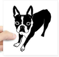 Amazon Com Cafepress Boston Terrier Sticker Square Bumper Sticker Car Decal 3 X3 Small Or 5 X5 Large Automotive