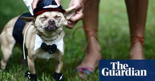 The Ethics Of Veggie Cats And Dogs Ethical And Green Living The Guardian