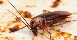 Residential Pest Control Services For Cockroach, in Bengaluru,   ID:  18226814391