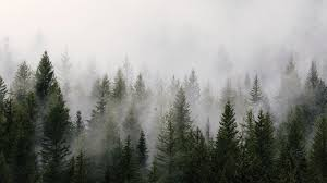 23 foggy forest wallpapers wallpaperboat