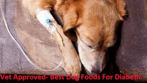 dog foods for diabetic dogs