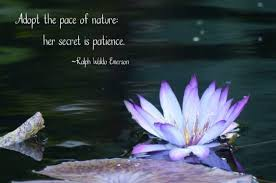 nature quotes about birds gardening and more quotes about nature