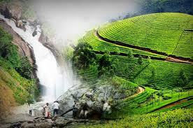 16 Places To Visit In Munnar   Tourist Attractions in Munnar