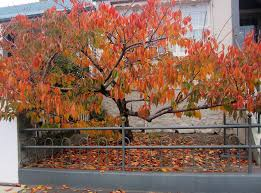 Veronika Wild: A gleam of Autumn