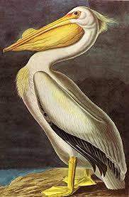 Amazon Com Pelican John James Audubon Wall Decal Peel Stick Removable 12 X 8 Home Kitchen