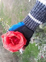 صور زهور جميلة جدا اتمنى ان تعجبكم الصور عالم الزهور