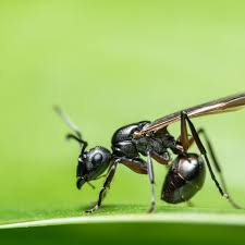 Get Looks Like Ants With Wings  Images