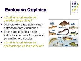 Resultado de imagen de Las mutaciones de las especies fueron lenta y adaptativas
