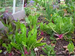 tips for year round vegetable gardens