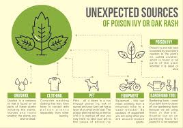 poison ivy infographic free