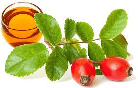 rosehip oil-н зурган илэрц