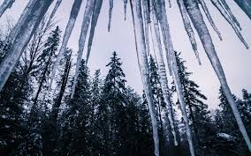 icicle winter trees forest ice
