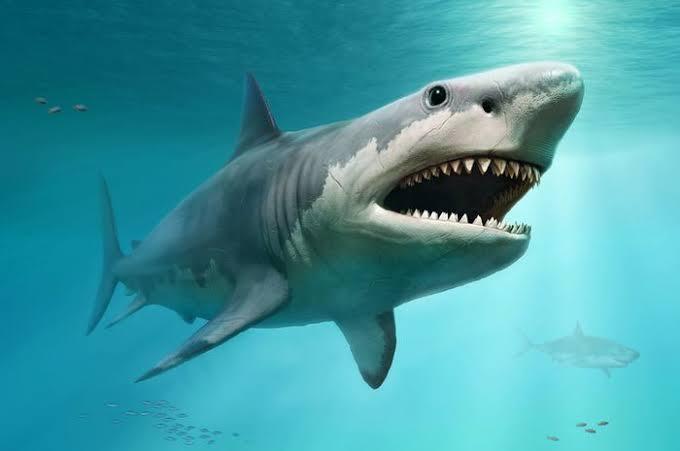 Tak Punah Dimakan Zaman, Tujuh Hewan Ini Pernah Hidup Di era Dinosaurus