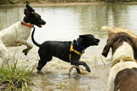 10 Best Off Leash Dog Parks In Colorado That Earn 2 Paws Up The Know