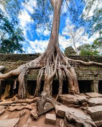 Ancient Architecture Ta Prohm Temple Angkor Wat Cambodia Sticker Wall Decals Perfectlazybones
