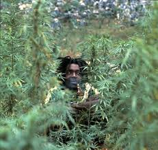 Peter Tosh Legalize It | Photographer unknown. | Flickr