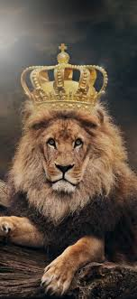 iphone wallpaper lion king crown