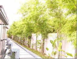 Clumping Bamboo Landscape Privacy Screen And Decoration Ideas Garden Ideas Outdoor Decor