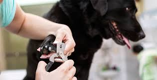 the easy way to cut your dog s nails