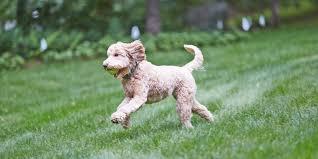 Dogwatch Hidden Fences Linkedin