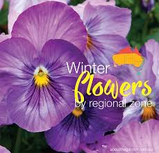 winter flowers planting guide by