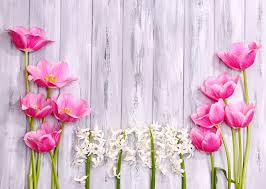 wallpaper tulip flowers hyacinths