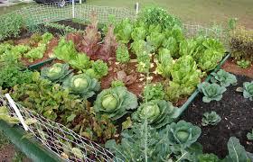 vegetable gardening in texas