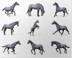 Poster Twee Achterste Paarden Pixers We Leven Om Te Veranderen