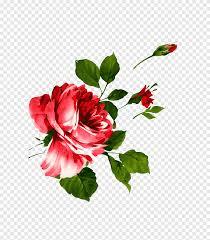 زهرة بتلة حمراء قرنفل زهور حمراء قرنفل الوردة البيضاءزهور