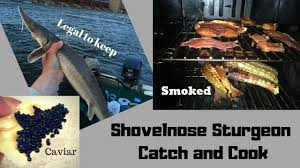 Shovelnose Sturgeon Catch and Cook with ...