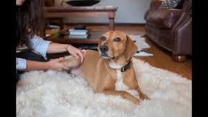 Pet Dish TV: Healing with Amber | Animal Humane Society