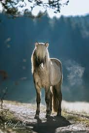 Pin by Wendi Watson on hoofshu | Horses, Horse breeds, Cute horses