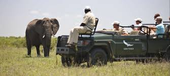 Image result for images of Ngala Safari Lodge