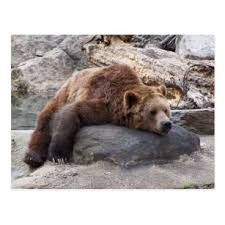 yogi bear gifts on zazzle