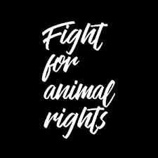 Amazon Com Fight For Animal Rights Cursive 6 Vinyl Car Decal White Automotive