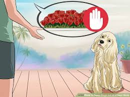 how to keep dogs out of flower beds 12