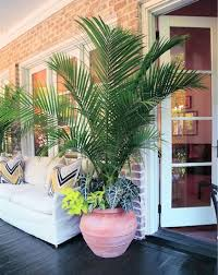 tropical patio porch plants potted trees