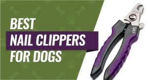 best dog nail clippers for small and