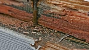 46+ Termites Hardwood Floor Damage Pictures