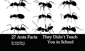 Get Tiny Flying Ants That Bite Pics