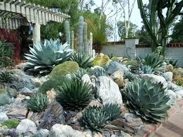 succulent rock garden succulent
