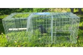 crow magpie traps
