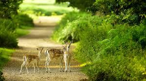 beautiful baby deer green nature