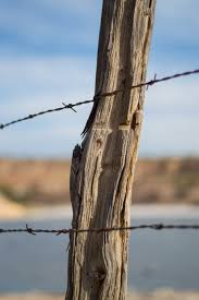 Free Images Tree Nature Branch Wood Sunlight Leaf Trunk Pile Reflection Mast Twig Fence Post Grass Family Plant Stem Woody Plant Outdoor Structure Home Fencing Stacheldrat 4000x6016 817528 Free Stock Photos Pxhere