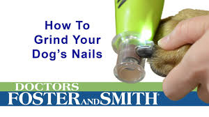 how to make a dog s nail quick recede