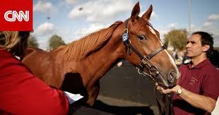 هل تفكر بشراء حصان قريبا اتبع 10 نصائح ضرورية قبل حسم قرارك