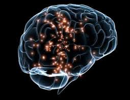How Smart Is Smart? Using An MRI To Quantify Human Intelligence ...